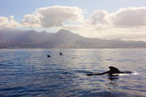 Дельфины в дикой природе